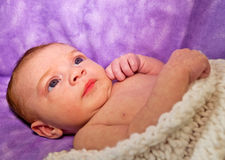Angelic Newborn Portrait Royalty Free Stock Image