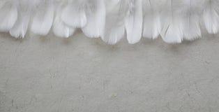 Angelic Row da pena branca que forma encabeçamentos fotos de stock royalty free