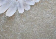 Angelic White Feather Corner Background imagem de stock