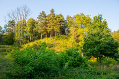 angelica δασικό υψηλό βασικό καλοκαίρι άνθησης ανασκόπησης Στοκ Εικόνες