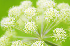 angelica Fotografia Royalty Free