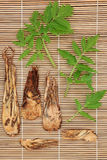 Angelica Herb. Root and leaf sprigs over bamboo background stock photos