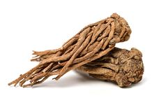Angelica Root Royalty Free Stock Photo