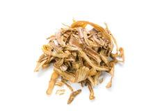 Angelica sinensis,dang gui Stock Image