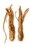 Angelika sinensis Lizenzfreies Stockbild