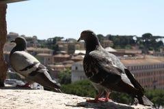 ` Angelo Castel Sant, Рим стоковая фотография rf