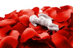 Angelo che dorme in petali di rosa del biglietto di S. Valentino immagini stock