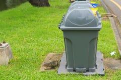 Angelockt durch die Geruche einiger Mülltonnen, wird eine junge Monitoreidechse in das Lassen ihrer Reizenfestlichkeiten aufgerüt lizenzfreies stockfoto