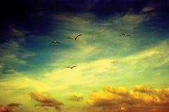 angels Elba Island Manhã NASCER DE O SOL imagens de stock royalty free