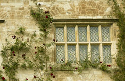 Angelsey Abbey - window detail. Detail of window with climbing red roses, Angelsey Abbey, Cambridgeshire, UK stock photo
