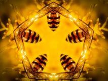 Angeordnet durch die Pentagon-Bienen-Unterseiten stockfoto