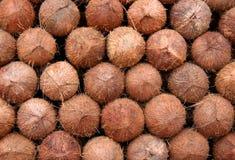 Angepirschte Kokosnüsse Lizenzfreies Stockfoto