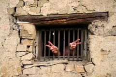 Anger. Angry prisoner behind the wooden window royalty free stock photos