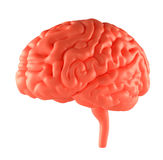 Anger Red Brain Stock Image