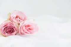 Angeredete Blumenphotographie auf Lager Lizenzfreies Stockbild