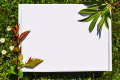 Angeredeter Vorrat photograpjy, digitale Datei des Modells Leeres Quadrat f?r Kunstwerk mit Hintergrund des gr?nen Grases und der lizenzfreies stockbild