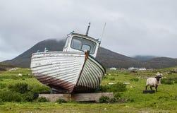 Angeschwemmtes Boot auf einem schottischen grünen Feld mit Schafen auf der Seite Lizenzfreies Stockbild