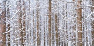 Angespannter gezierter Wald am Winter stockfotografie