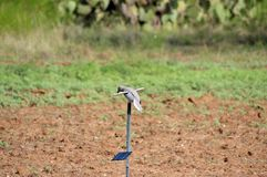 Angetriebener SolarMojo Dove Decoy in Texas-Wüste stockfoto