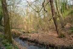 Angielscy drewna. Zdjęcie Stock