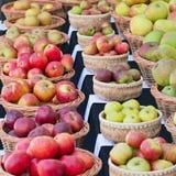 Angielscy jabłka na przedstawieniu w jesieni obraz stock