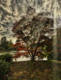 Angielska jesień z jeziorem, drzewami i widocznymi słońce promieniami, - Uckfield, Wschodni Sussex, Zjednoczone Królestwo zdjęcia royalty free