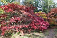 Angielska jesień Fotografia Stock