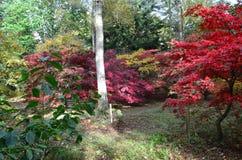 Angielska jesień Zdjęcie Royalty Free