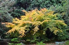 Angielska jesień Obrazy Royalty Free