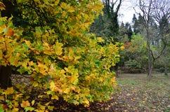 Angielska jesień Zdjęcia Royalty Free
