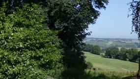 Angielska wieś widzieć przez mgiełki brzozy drzewo 4 obraz royalty free
