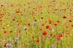 Angielska Wildflower łąka zdjęcia stock