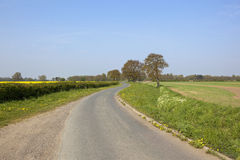 Angielski kraju pas ruchu z dębowymi drzewami Obrazy Stock