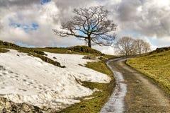 Angielski kraju pas ruchu z odosobnionymi drzewami i bankiem śnieg Obraz Stock