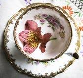 Angielski porcelany teacup Zdjęcia Stock
