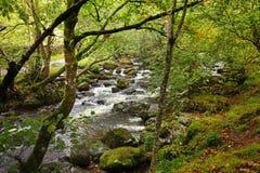 angielski rzeczny las Fotografia Stock