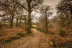 Angielski sceniczny krajobraz w ranku przy Felbrigg, Norfolk obraz stock
