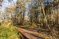 Angielski sceniczny krajobraz w ranku przy Felbrigg, Norfolk fotografia royalty free