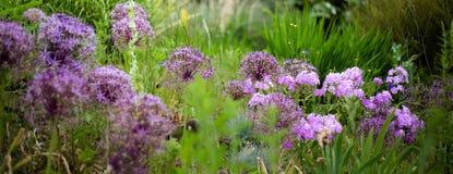 Angielszczyzna ogródu kwiaty Zdjęcia Royalty Free
