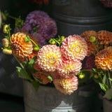 Angielszczyzny karzą grzywną dalie dla sprzedaży dla specjalnych okazj: śluby, urodziny, datują Zdjęcie Stock