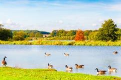 Angielszczyzny kształtują teren w jesieni Zdjęcia Stock