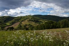 Angiosperme in Carpathians fotografie stock libere da diritti