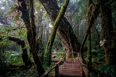 Angka international Nature Trail, Chiangmai, Thailand. Royalty Free Stock Images