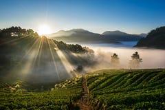 早晨草莓农场 土井angkhang, Chiangmai 图库摄影
