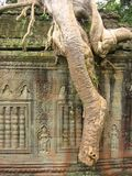 angkor印度榕树根源破庙wat 库存照片