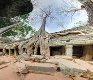 angkor巨型结构树wat 免版税库存图片