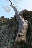 angkor收割废墟siem 图库摄影