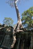 angkor收割废墟siem 库存图片