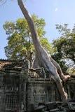 angkor收割废墟siem 免版税库存照片
