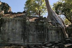 angkor收割废墟siem 免版税库存图片